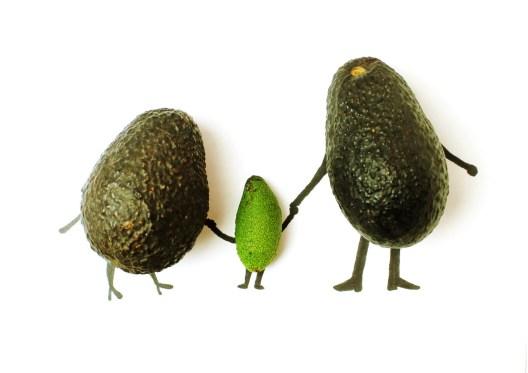 the avocado family