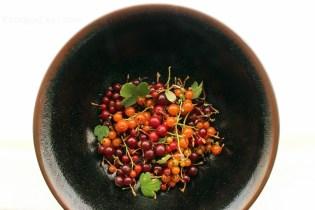 wild california currants