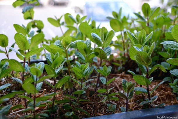 Ellacure Belconnen herbs