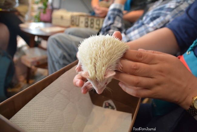 Harry Hedgehog Cafe Tokyo albino