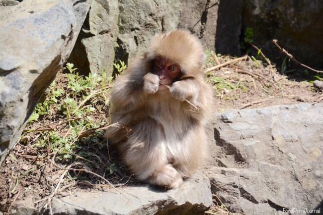 Japan Yamanouchi snow monkey park