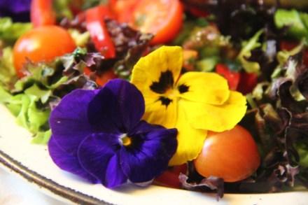 frivole viola's bloombites