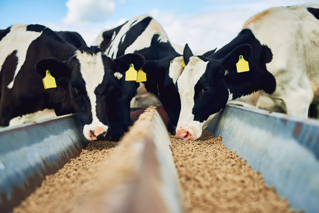 Climate change: CAFOs and greenhouse gas emissions