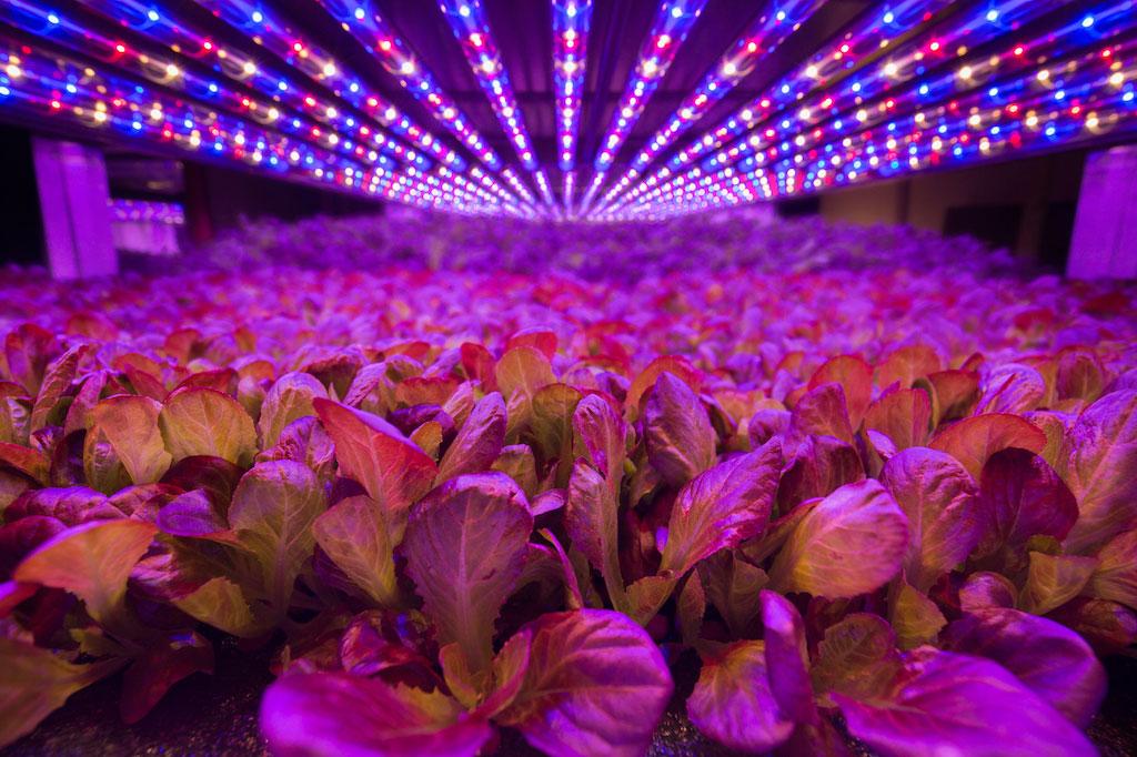 帶LED的航空農場