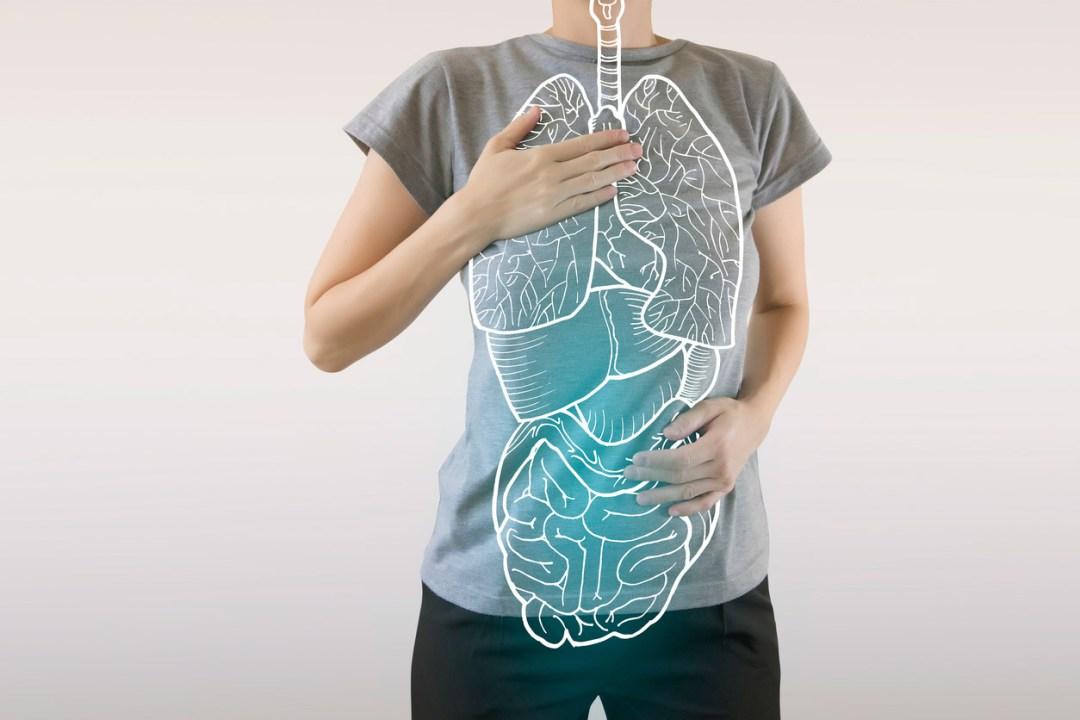 身體頂部的內部器官圖形