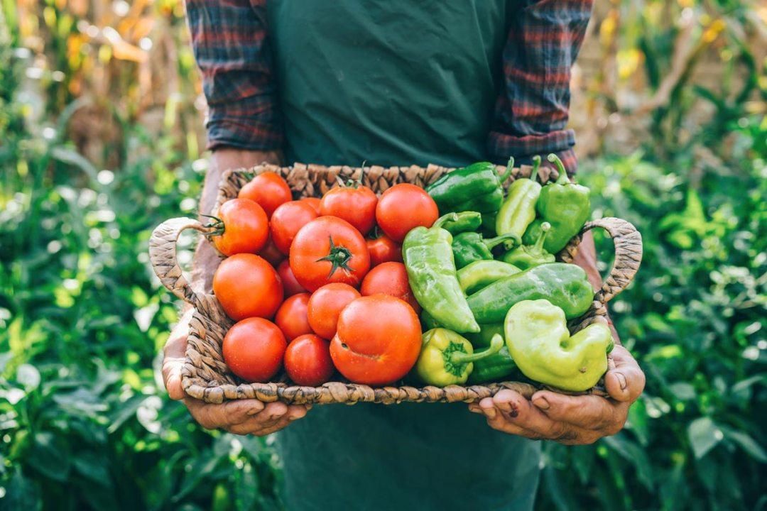 農民在籃子裡提著蔬菜