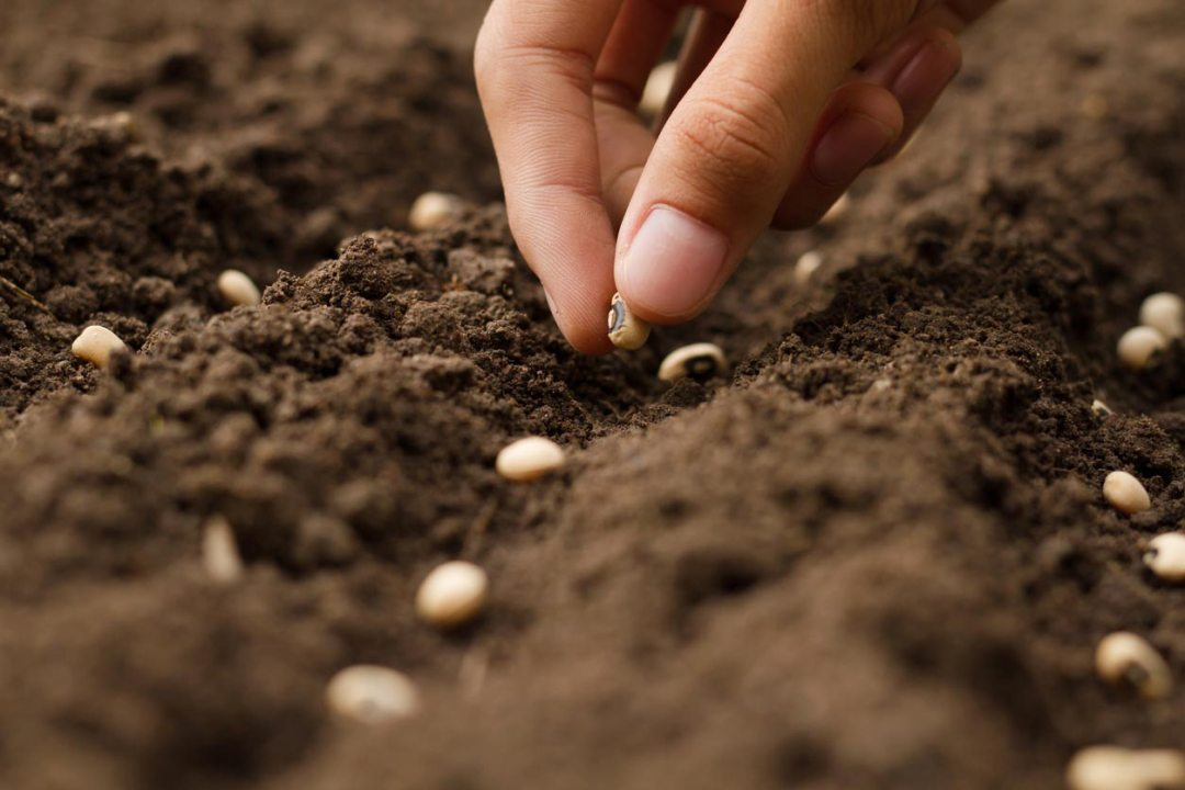 手在污垢中種植種子