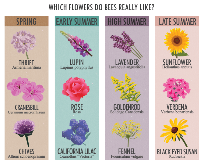 蜜蜂真的喜歡哪些花?