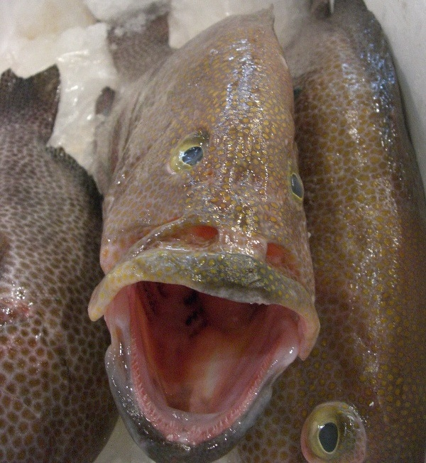 One Fish's Reaction to the News...