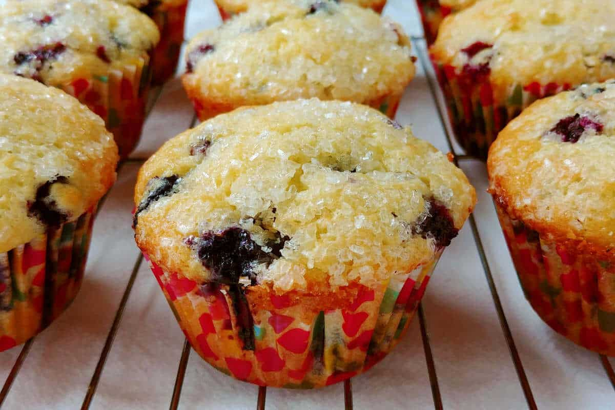 perfect blueberry muffins, lined up in a row on a baking rack