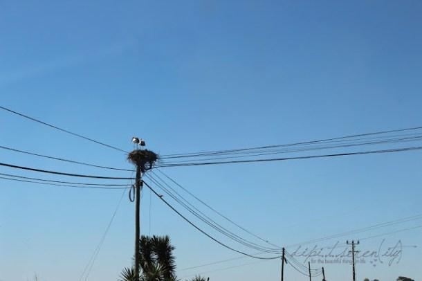 Storche in Portugal