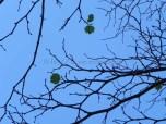 Leaf on branch9