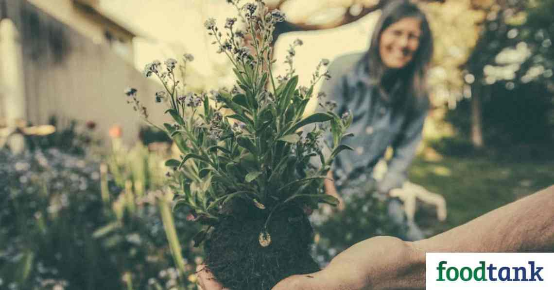 Home Gardening Promotes Mental Health During Covid 19 Food Tank