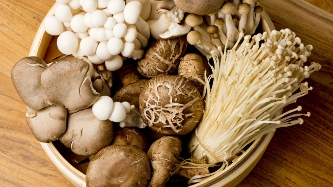 Mushroom Ancient Suoerfood