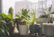 best indoor air purifying plants