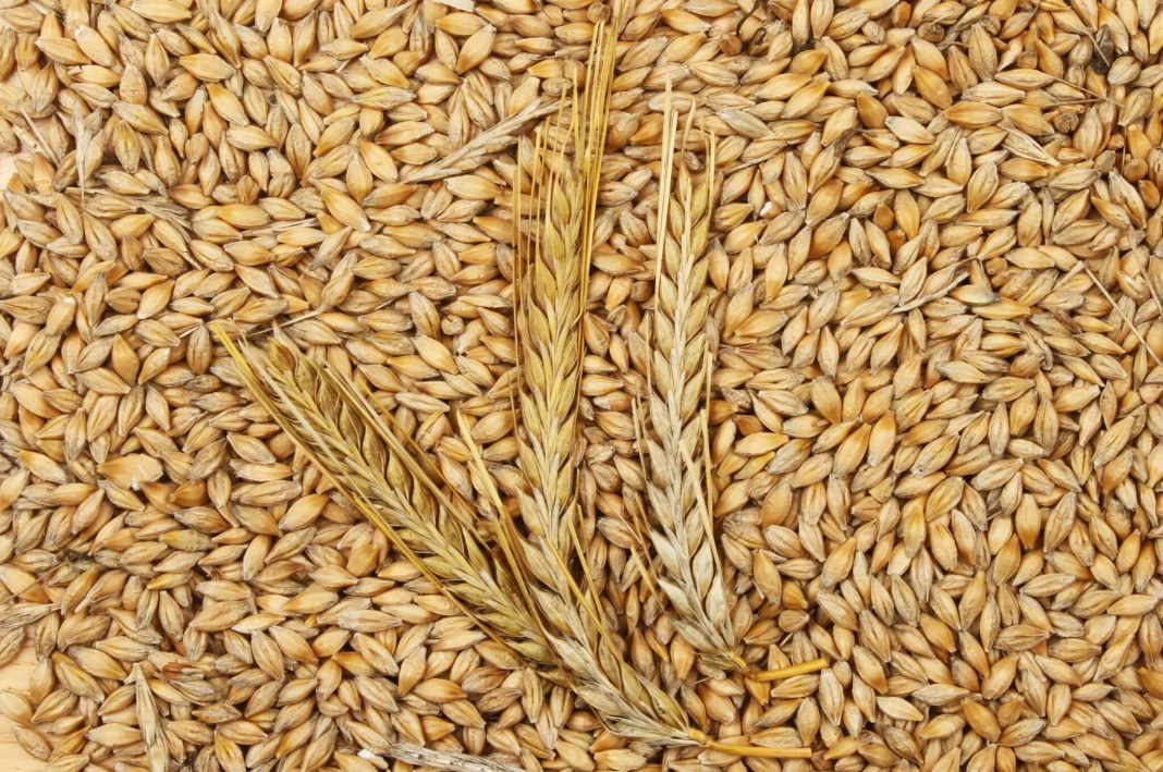 Barley health benefits and side effects