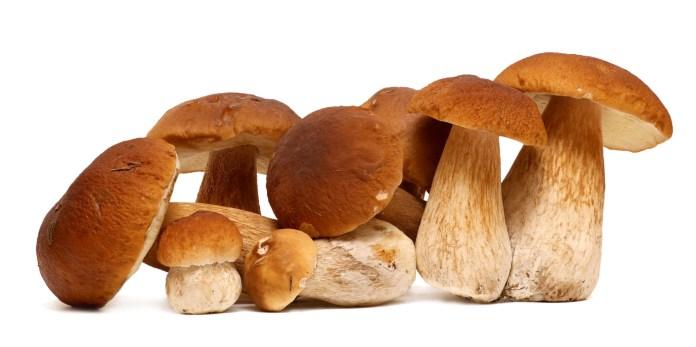 Porcini mushroom health benefits
