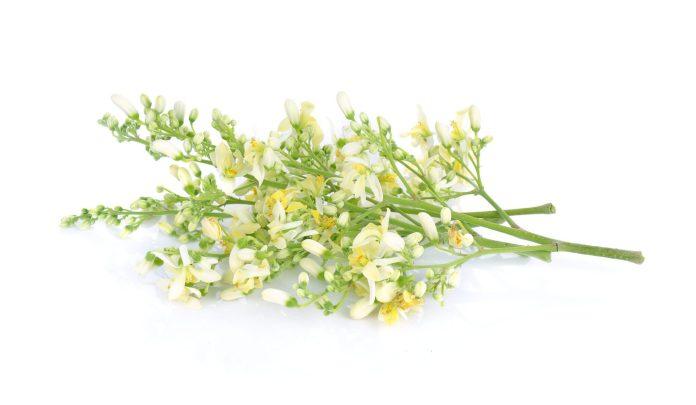 Moringa flower benefits