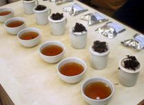 tea tasting session in india
