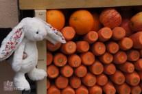 Blossom the Travel Bunny captivated on Portobello Rd, London