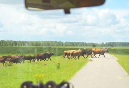 10x mooie natuurgebieden in Nederland