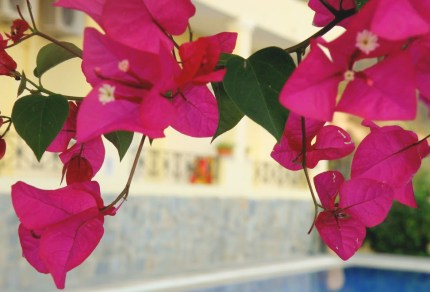 Dit zijn de mooiste plekjes op bloemeneiland Corfu