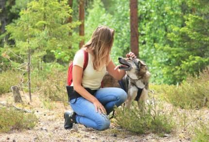 Voor op je bucketlist: Wandelen met husky's in Zweden