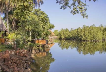 Groen overnachten aan de Gambia rivier bij AbCa's Creek Lodge