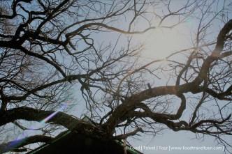 Travel Africa (SA) - Dullstroom 05 Sun (1)