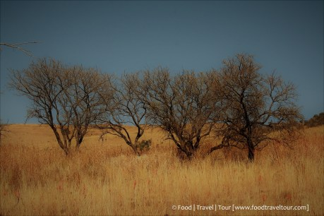Travel Africa (SA) - Dullstroom 06 Other (1)