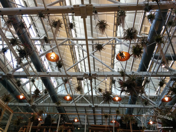 Anaheim Packing House Ceiling decoration with plants and lights