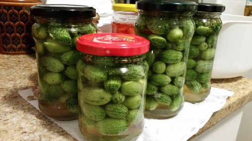 Pickled cucamelons