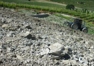 A good example of the soil in Barolo. It breaks to a fine dust in your hand.