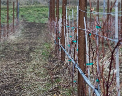 Even in winter there's vineyard work to do.
