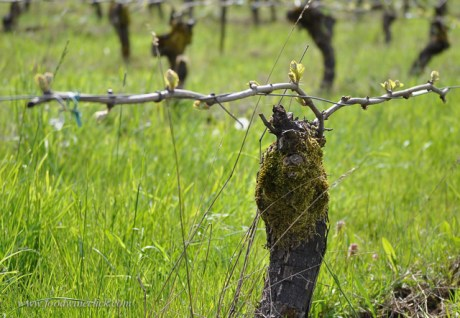 Weather is out of the winegrower's control