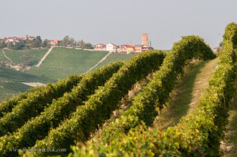 Barbaresco tower from a vineyard near Neive