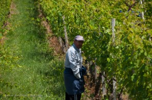 The vineyard workers don't mind walkers, just behave (no litter, etc...)