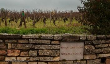 Pommard Ruggiens, one of the top 1er cru vineyards