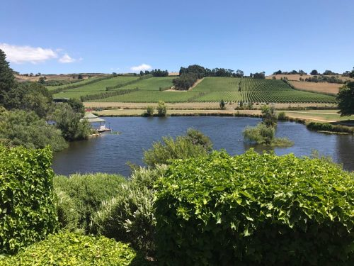 Amazing view from Josef Chromy cellar door
