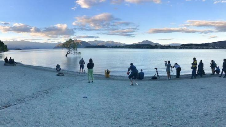 that wanaka tree and its fan