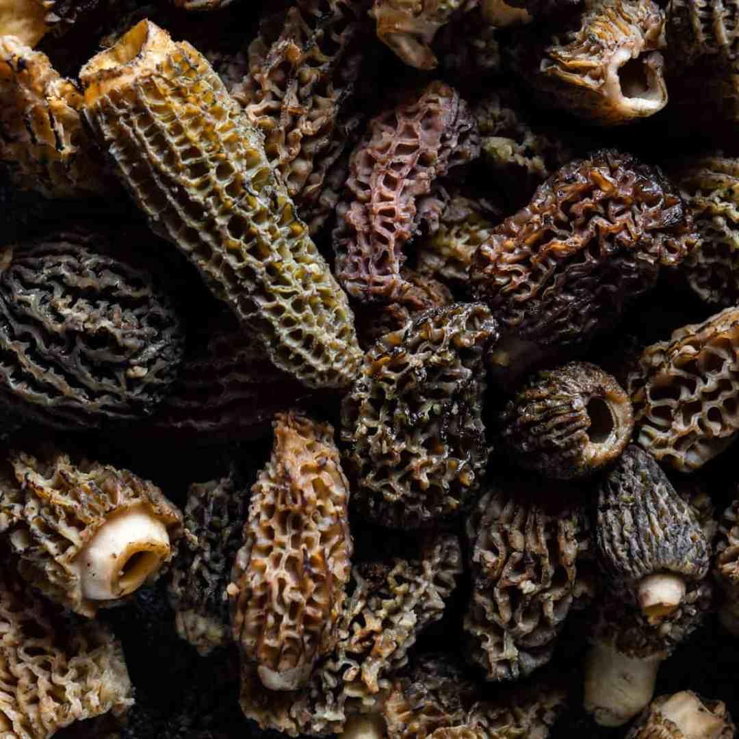 close up macro shot of fresh morel mushrooms