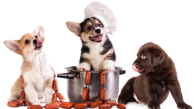 Pet food. Three dogs in chefs clothing on a saucepan against a white background.