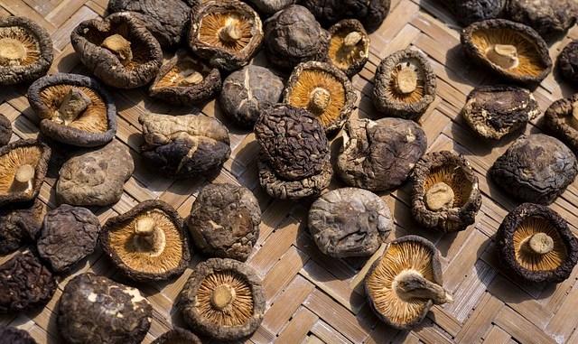 Mushrooms sitting on a table.