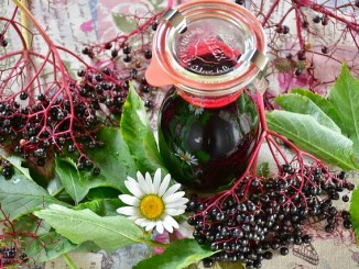 Elderberry juice in a Kilner jar surrounded by elderberries, green leaves and a daisy.