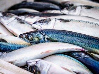 killing fish