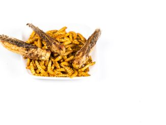 Mealworms and locusts. a Healthy snack