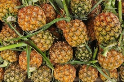 Pineapples with their leaves on.. A source of bromelain.
