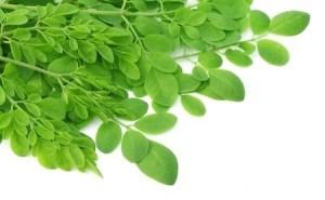 Edible Moringa leaves. Copyright: bdspn / 123RF Stock Photo