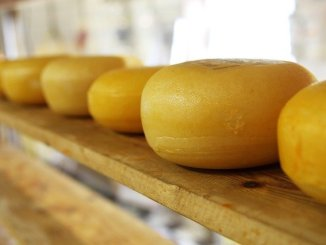 cheese rounds on a shelf