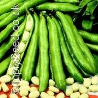 broad-bean-storka-2914139-200x200
